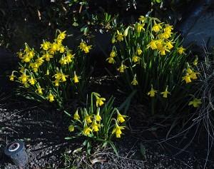Februaryflowers2