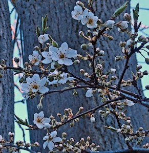 Februaryflowers3