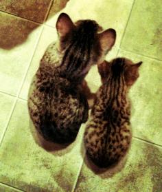 Elliot and Jasper