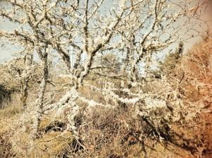 Tree4b