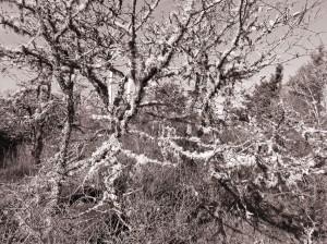 Tree4c