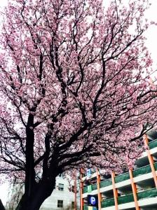 February82015-Pink2