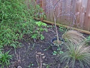March262015-gardeng