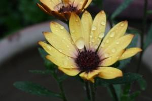 Closeup2